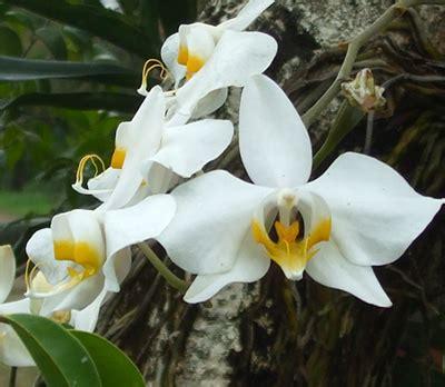 daftar nama tumbuhan tanaman  nama latin alamendah