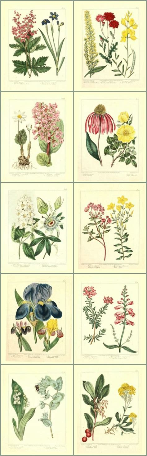 free printable wall art set library of free printable botanicals stretch your
