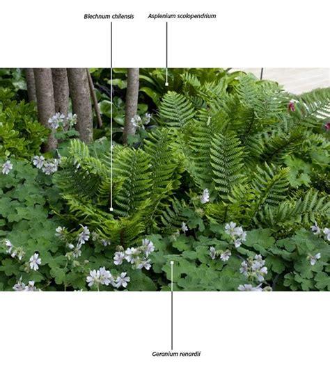 witte thee tuinen tuin landschap foto film plants pinterest