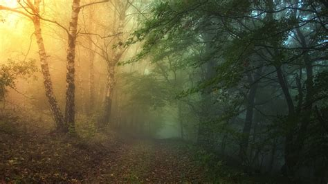 wallpaper laptop gaul 48 mysterious forest path leaves fog nature hd wallpaper