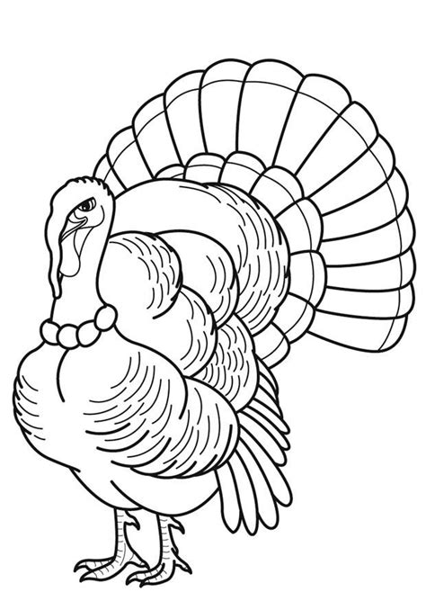 coloring page of a turkey feather turkey feather coloring page coloring home