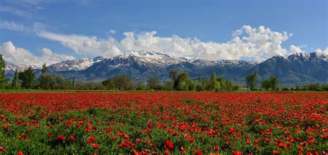 erzincan turkey munzur mountain munzur mountains poppy