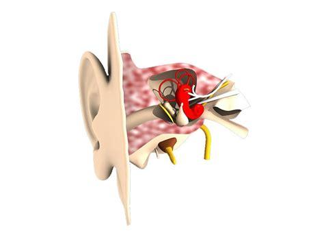 orecchio interno vertigini sindrome di m 233 ni 232 re sintomi diagnosi e cure