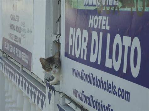 fior di loto bra fior di loto hotel juan dolio dominikanska republiken