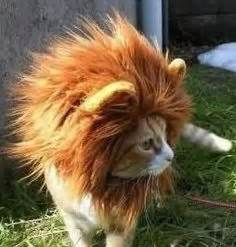 haircut for long hair cat 1000 images about hair on pinterest long haired cats