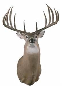 world record whitetail could be