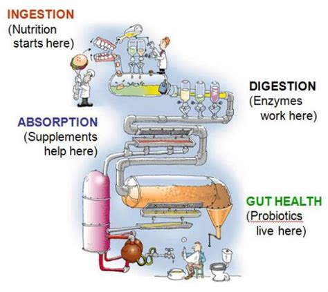 Probiotics And Stool by The Scoop On Probiotics Innovative Health