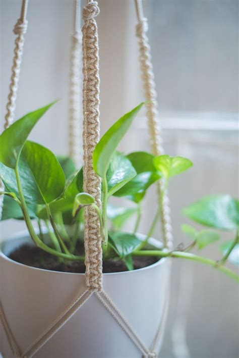 Plants Hangers - 25 best ideas about macrame plant hangers on