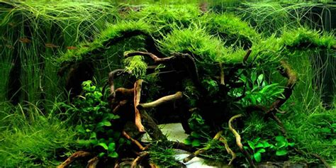 how to make aquascape how to create aquascape with jungle style aquascaper