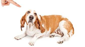 Dog Punishment In Dog Training
