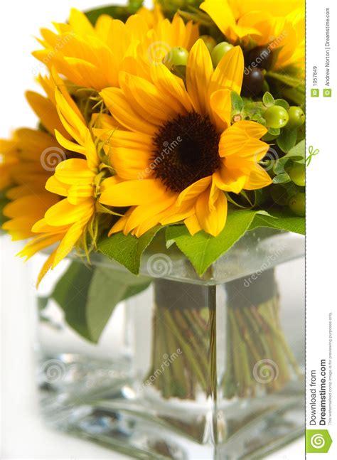 girasoli in vaso girasoli in vaso immagine stock immagine di florist