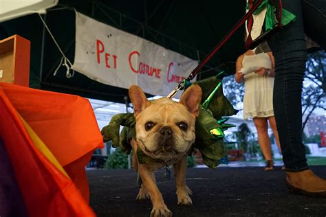 Pet Sweepstakes - gallery halloweekend and homecoming the miami hurricane