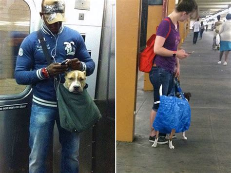 dogs on nyc subway nyc subway banned dogs unless they fit in a bag so owners got creative