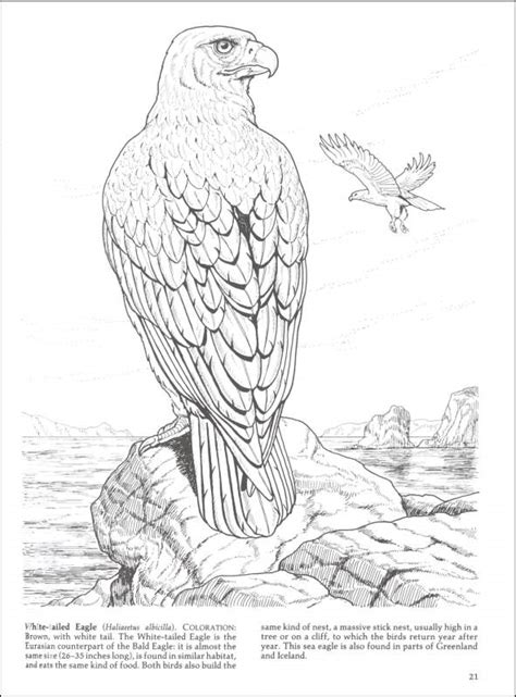 free coloring pages of birds of prey free birds of prey coloring pages