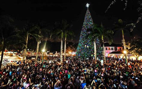 flordia xmas trees the best trees in the united states travel leisure