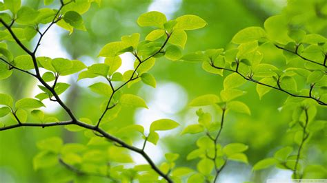 9 Gb Vocer Tree Branch With Green Leaves 32 Wallpaper 1920x1080