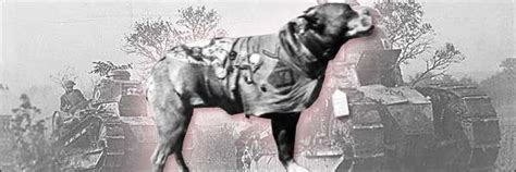 Sergeant Stubby Cracked 7 Dogs That Accomplished More Than We Will Cracked