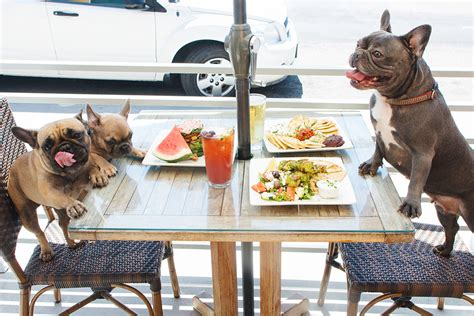 friendly restaurants 7 pet friendly restaurants and bars in la the la socialites