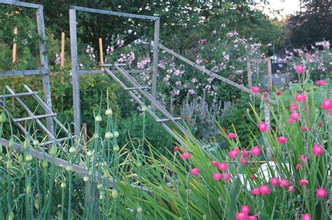 climbing plants for trellis trellises