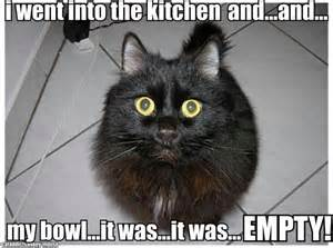 Lol Cat Meme - oh noes cat meme lolcat love cats pinterest
