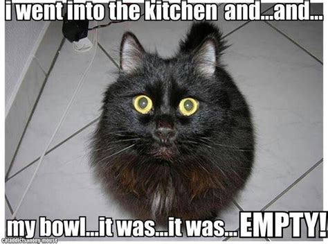 Lol Cat Meme - oh noes cat meme lolcat evil fuzzy overlords
