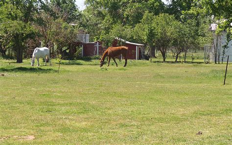 houses for sale in rio linda 187 rio linda horse ranchette