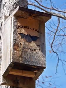 backyard bat house bat house plans tips for building a bat house and