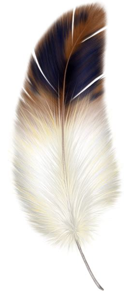 feather tattoo png brown y la pluma blanca clipart clipart png