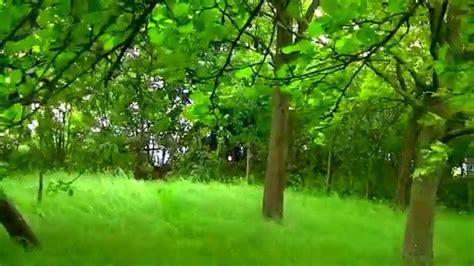 Green Garden by 1moment Nature Green Garden Grass Windy Orchard Trees