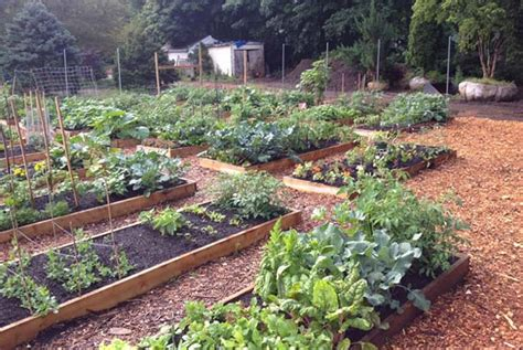 What Is A Community Garden by Eartheasy Bloglessons Learned From Starting A Community