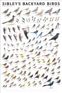 Backyard Birds Of North America by Sibley S Bird Calendars And Posters
