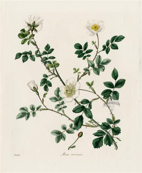 the art of botanical botanical art nature as art and inspiration