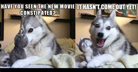 pun husky memes image memes at relatably com