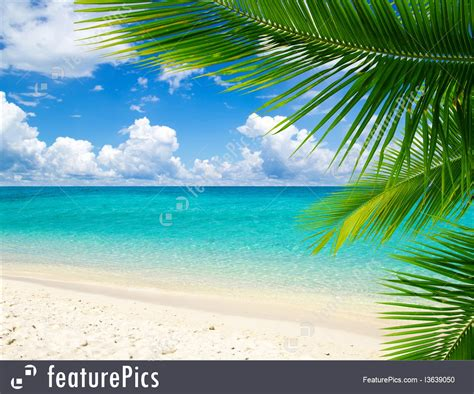 nature landscape tropical scene stock image