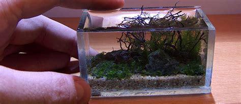 aquascapejuara ukuran mininano aquascape
