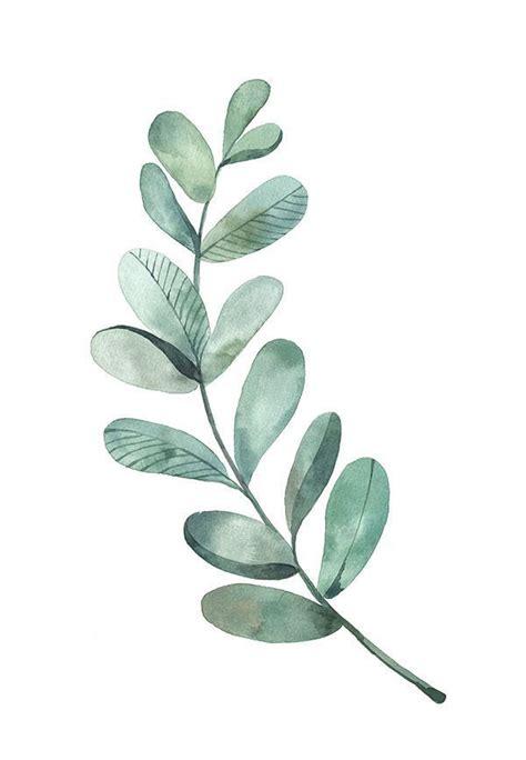 bilderesultat for eucalyptus leaves watercolour inspiration maling illustrasjon bakgrunner
