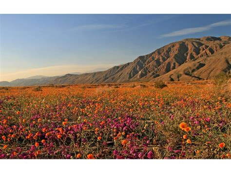 where is anza borrego anza borrego desert state park wildflowers hikes