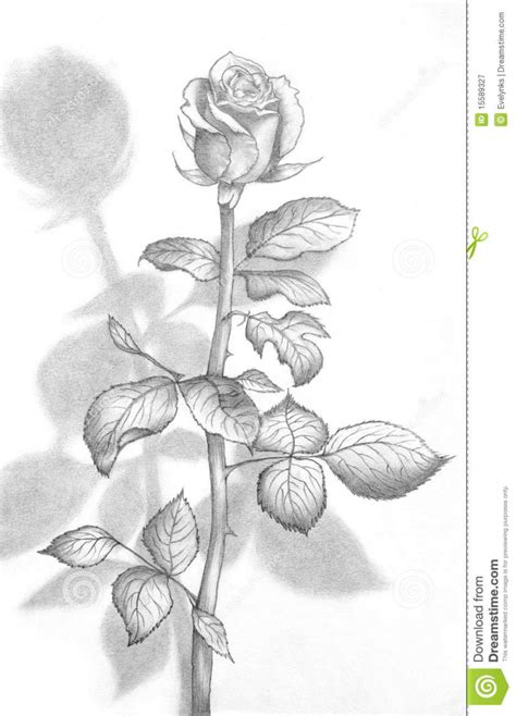 Best Home Ideas Net 3d Flower Drawings In Pencil Pencil Drawing Of A Beautiful