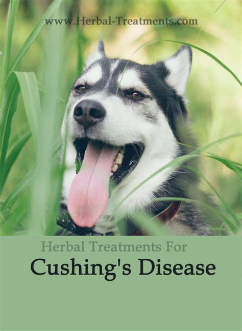 s disease in dogs treatment cushing s disease in dogs caraf avnayt s herbal treatments