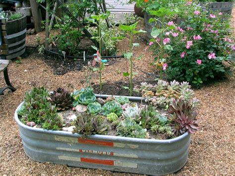 Garden Troughs Trough Succulent Garden South Landscape
