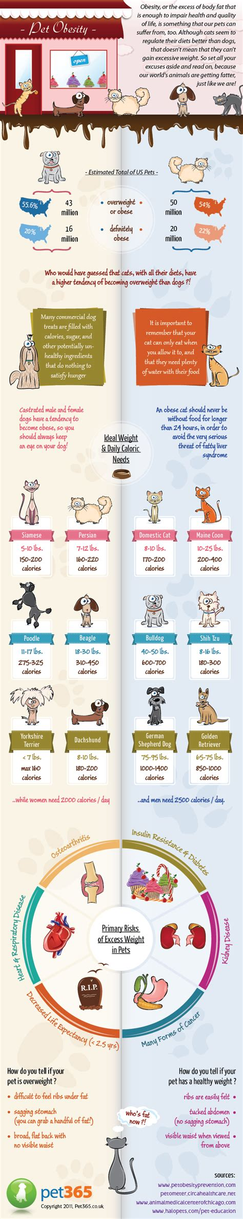the human psyche and the pet obesity epidemic pet obesity infographic infographic list