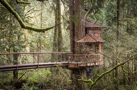 treehouse point burl treehouse at treehouse point
