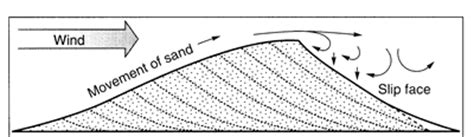 sand dune cross section geologic tour oasis state park