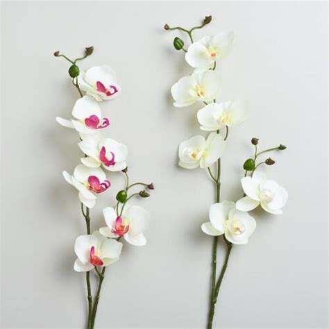Orchid Set 2 White And Phalaenopsis Orchid Stems Set Of 2