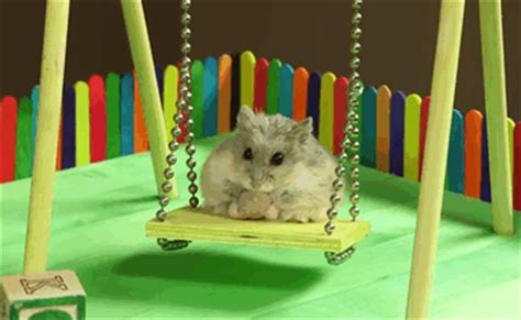 hamster swing hamster swing gif find share on giphy