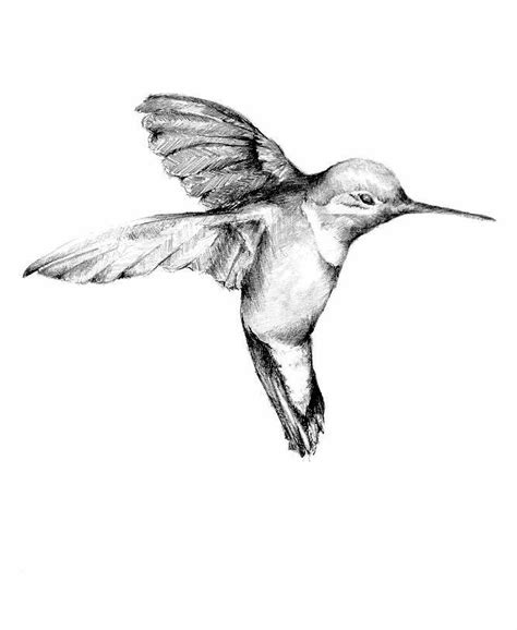 bevalet s hummingbirds and flowers a vintage grayscale coloring book vintage grayscale coloring books volume 3 books 25 best ideas about realism on