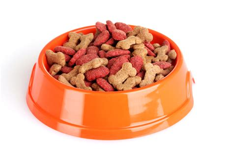 how do dogs eat puppy food object moved