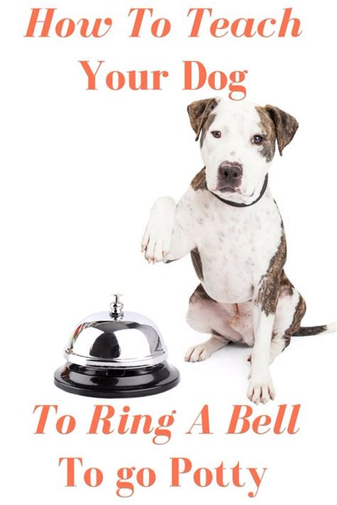 how to bell a puppy 33 hacks you need to try today page 2 of 5 diy