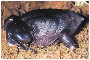 Rarest In The World One Of The Rarest Frogs In The World Moolf
