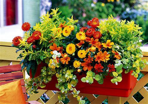 fiori da davanzale i fiori da mettere sul davanzale donna moderna